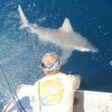 Fish Bomb team and friends caught a Tiger Shark